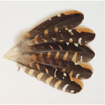Перо фазана 15-20 см