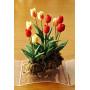 Тюльпаны садовые для кукольного дома